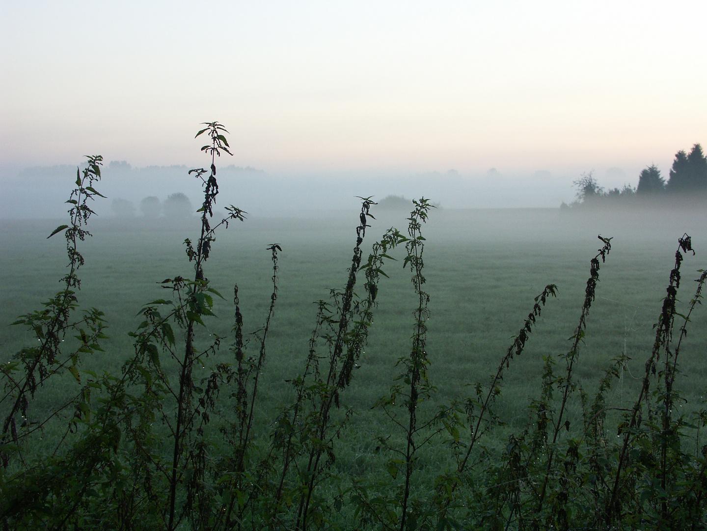 Nesseln im Nebel