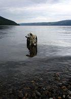 Nessie :)
