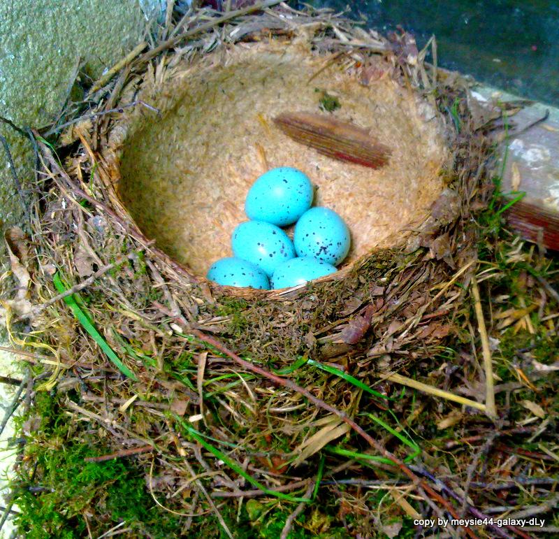 Nest einer Singdrossel