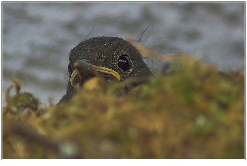 Nest-Lunzer