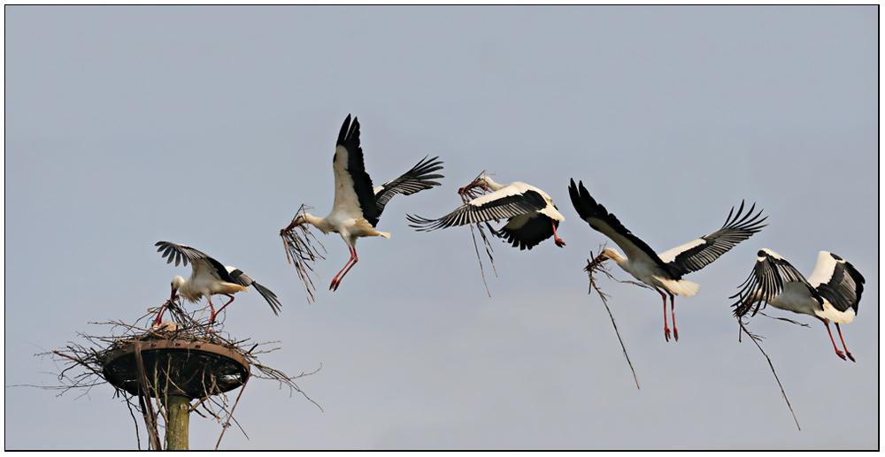 nestbau zusammenfassung foto bild tiere wildlife
