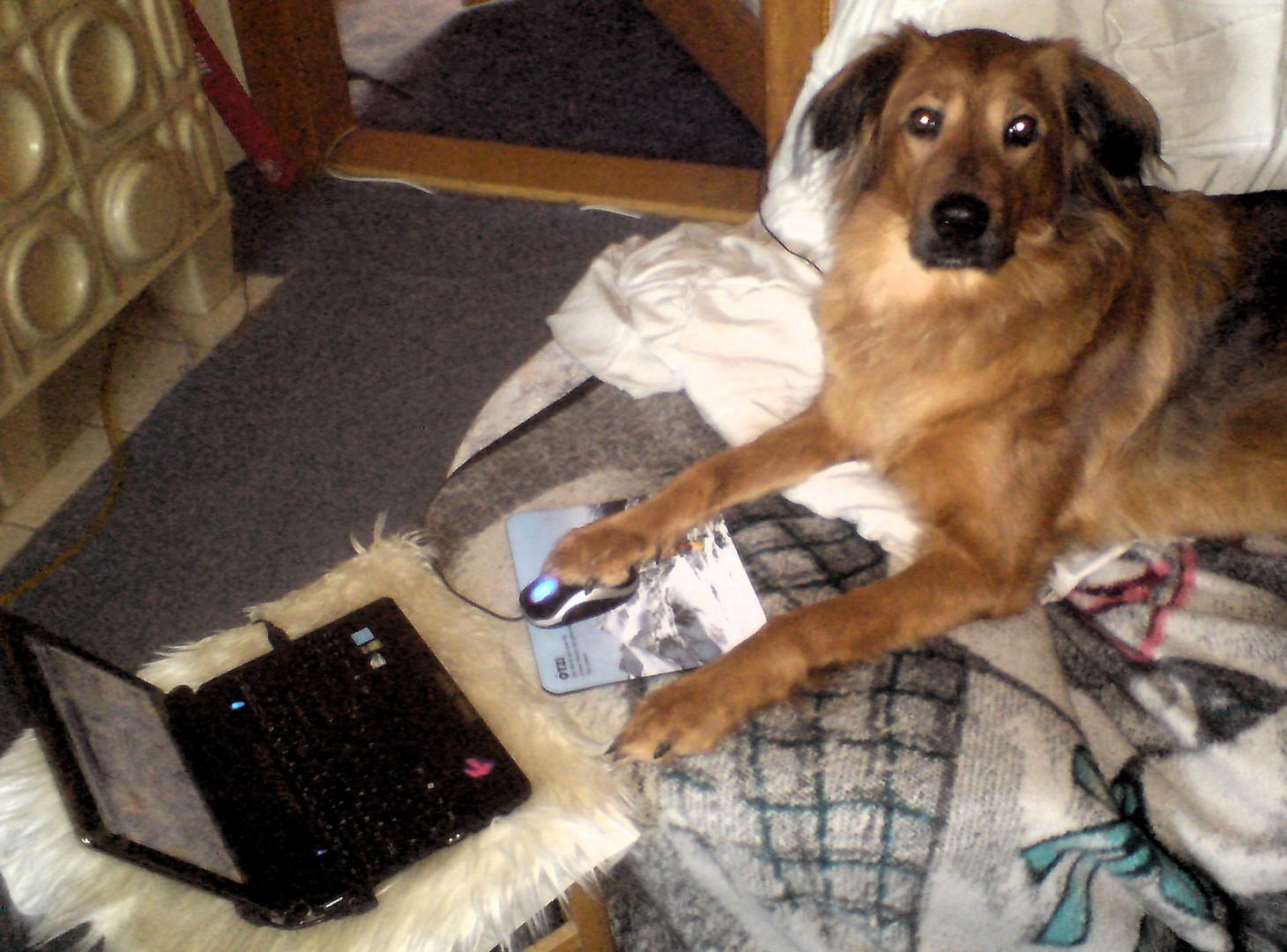 """Net - Dog"""