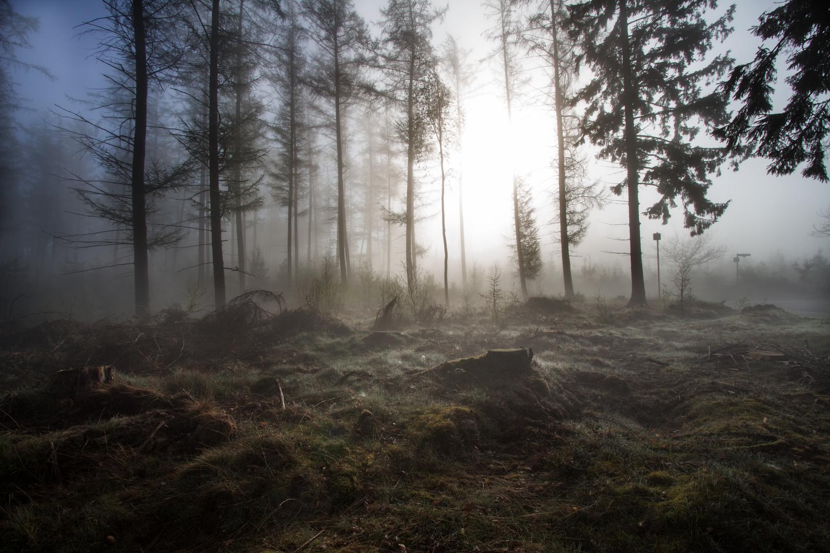 Nettenscheider Wald 2