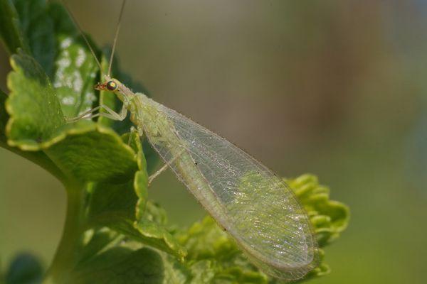 Nettes grünes Insekt