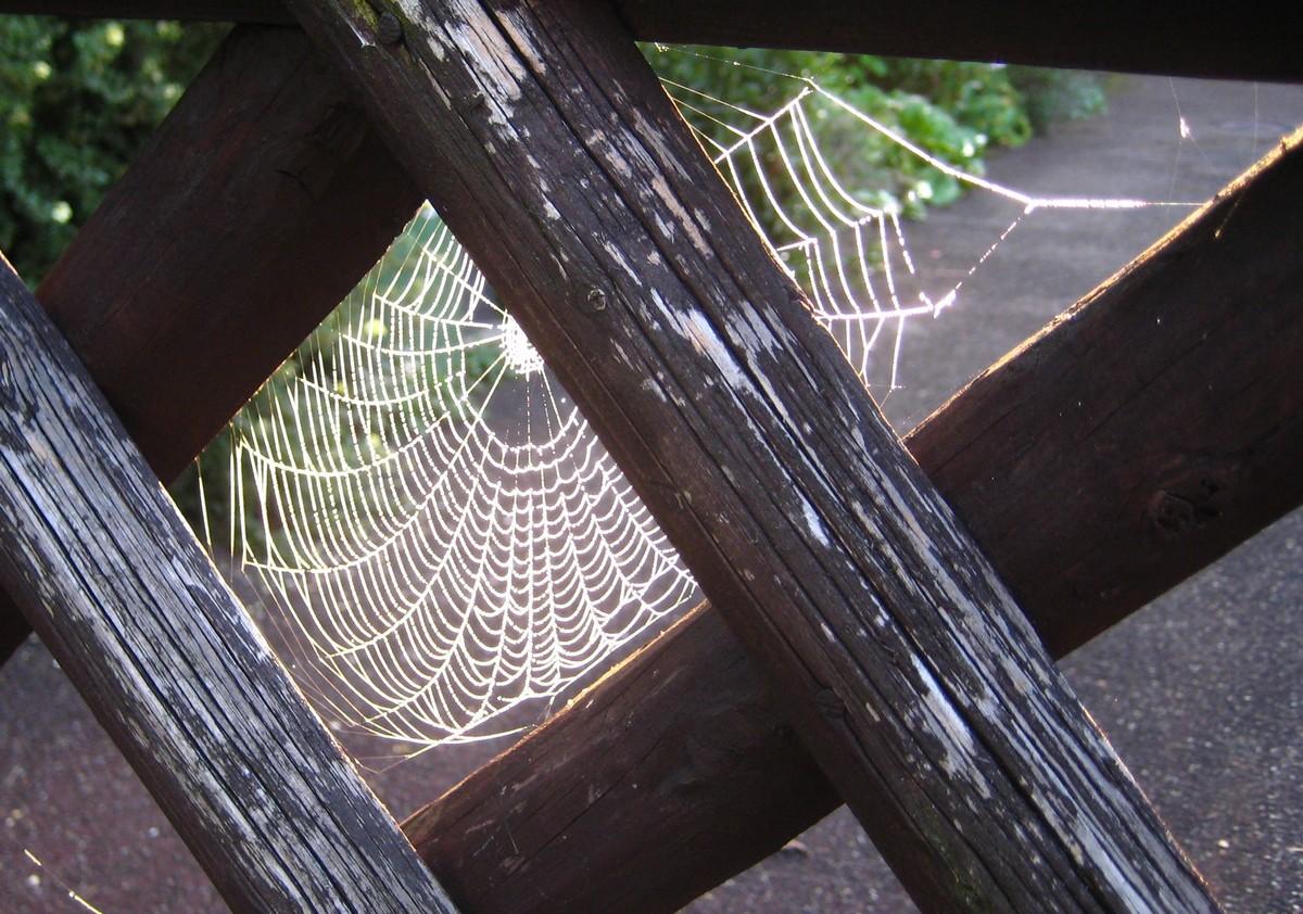 Netz hinter Gittern