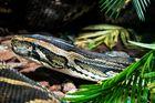 Netz Python