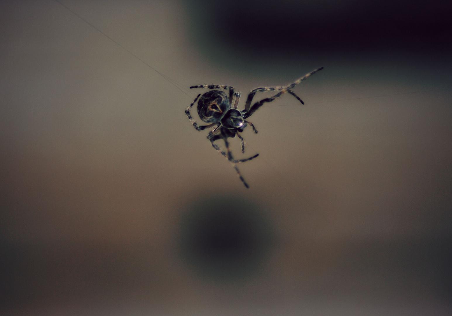 Netz Spannen netz spannen foto bild tiere tierdetails natur bilder auf