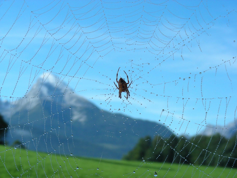 Netz über den Alpen