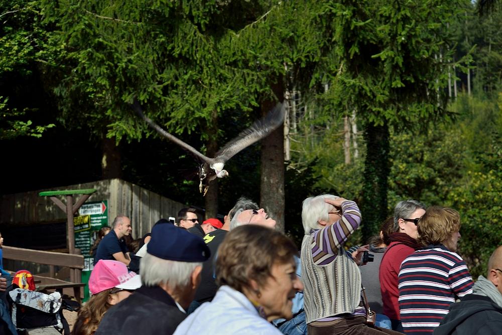 Netzwerk Ausflug in den Vogelpark Steinen 2.10.13 Nr.5