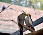 Netzwerk Ausflug in den Vogelpark Steinen 2.10.13 Nr.8