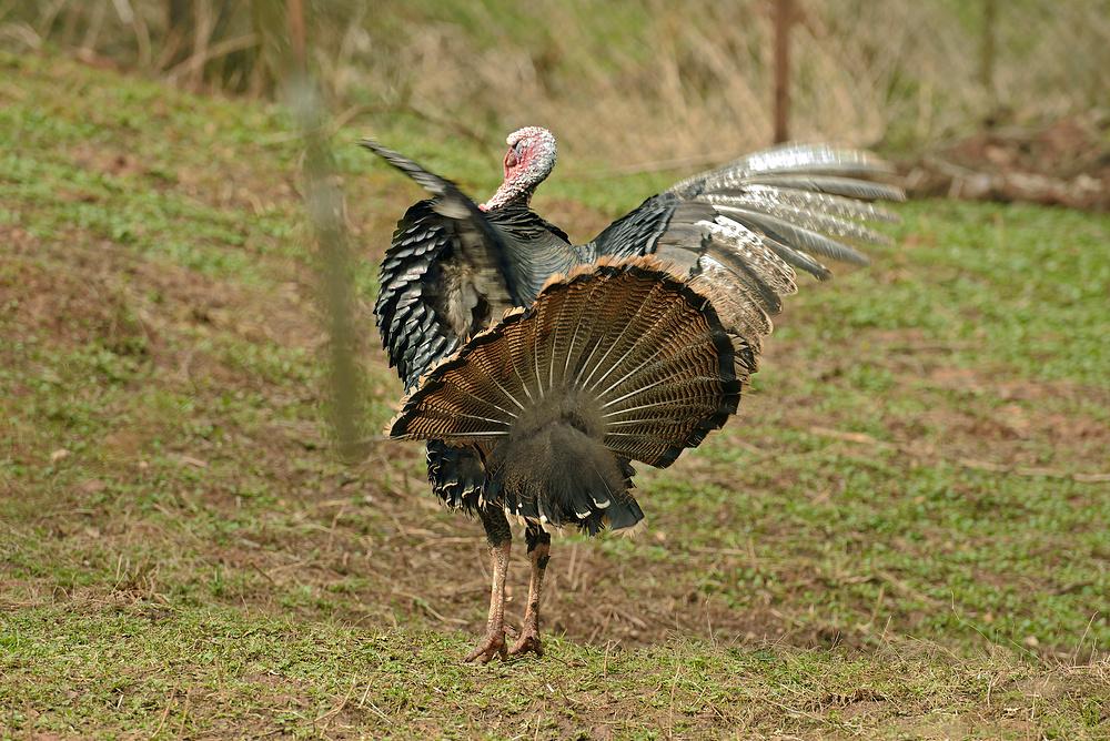Netzwerk Ausflug in den Vogelpark Steinen 2.10.13 Nr.9