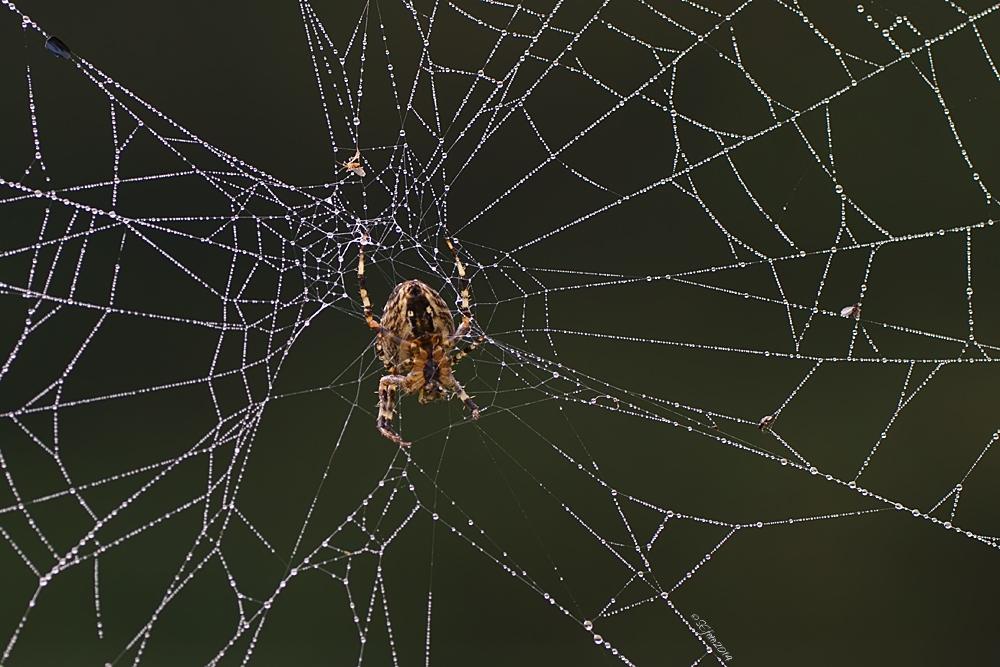 Netzwerk-Gründerin