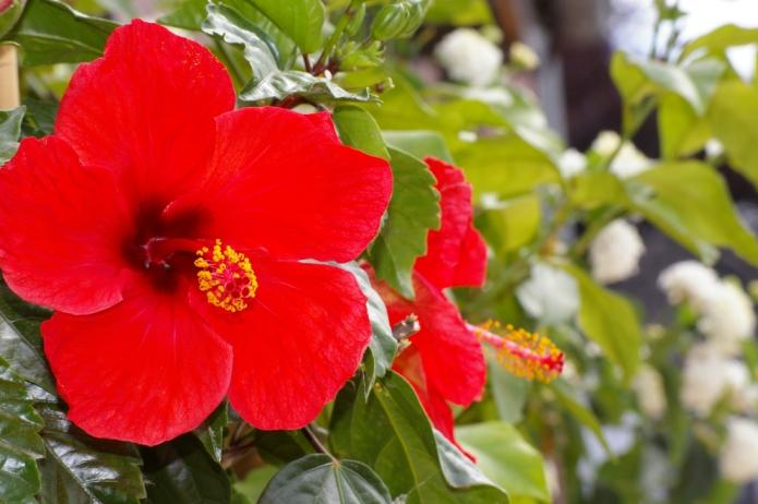 Neu in meinem Garten