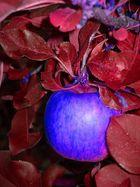 Neue Apfelsorte auf dem Markt