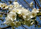 neue blüten