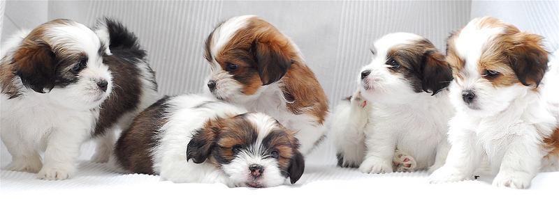 Neue Hundchen