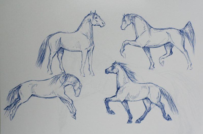 neue pferdeskizzen