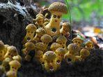 Neue Pilzart entdeckt !!
