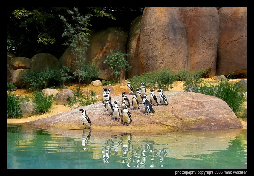 neue pinguin anlage im zoo wuppertal foto bild tiere zoo wildpark falknerei v gel. Black Bedroom Furniture Sets. Home Design Ideas