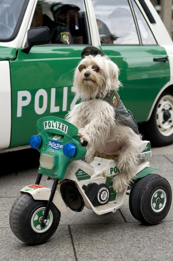 Neue Regierung verspricht: Mehr Polizeikräfte in NRW