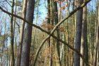 -Neue Waldverkehrszeichen-