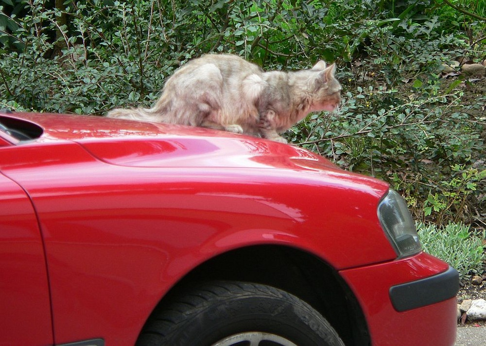 neuer Jaguar? Typ?