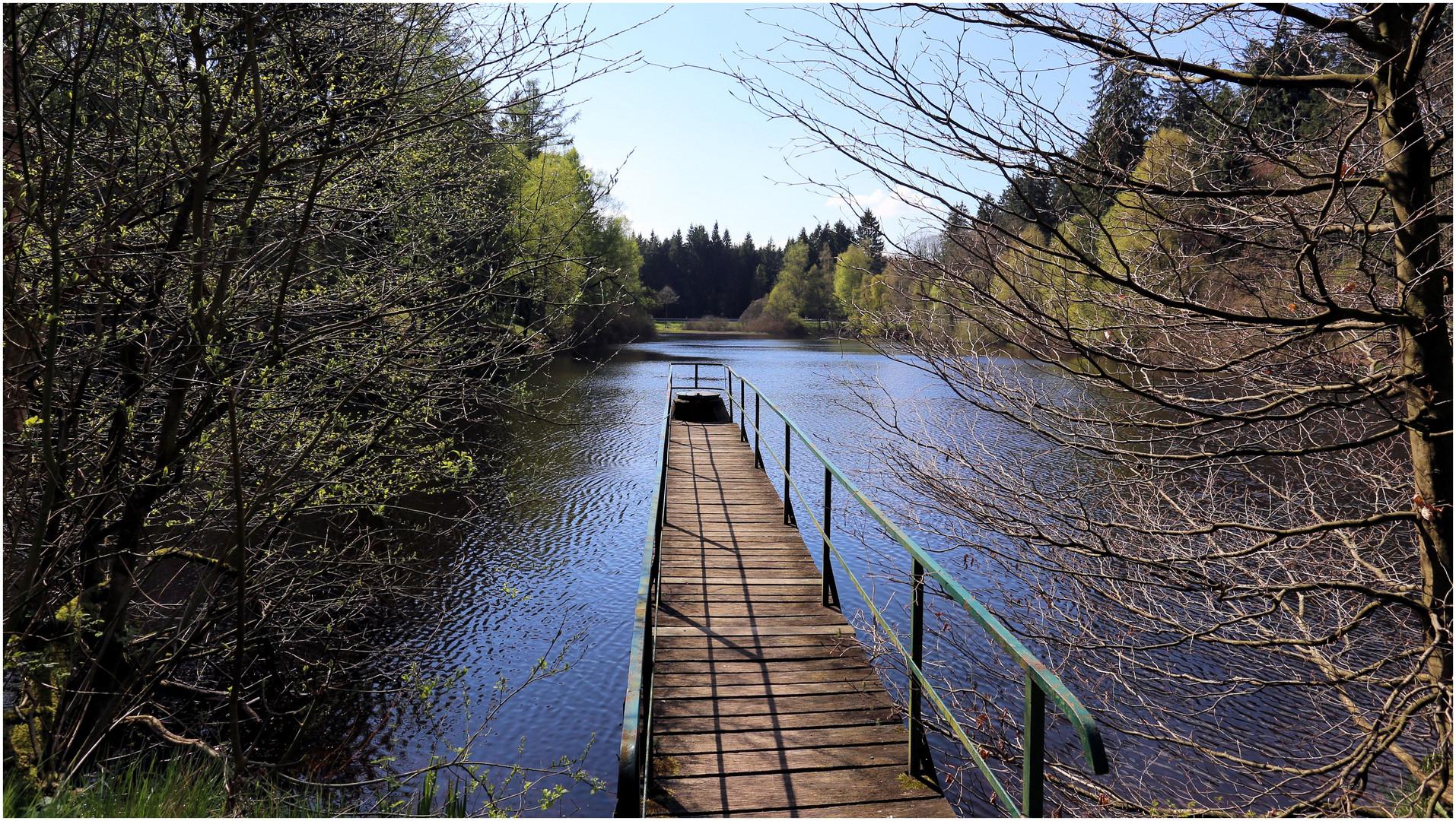 Neuer Teich im Solling