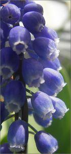 Neues aus meinem Garten 08/VII