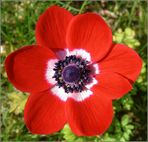 Neues aus meinem Garten 09/IV - Heute erblüht