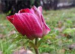 Neues aus meinem Garten 10/X-11/I - Wintermone