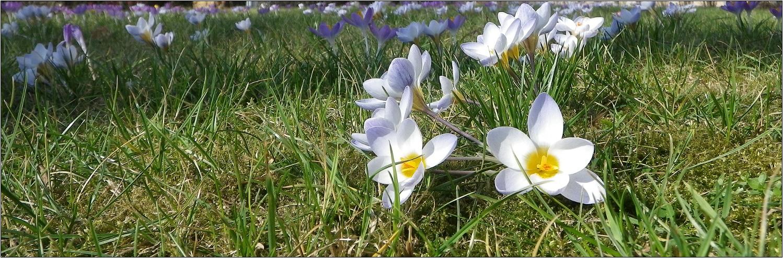 Neues aus meinem Garten 12/I - Frühlingsnachhall