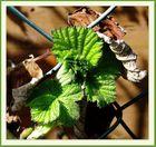 Neues Grün aus altem Laub