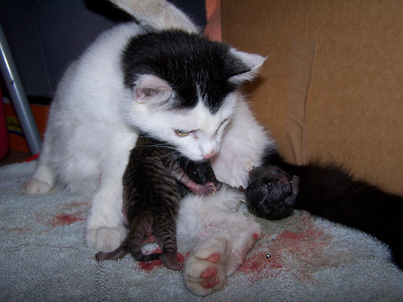 neues Leben cat-art