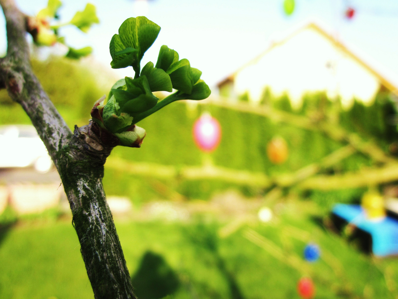 Neues Leben im Frühling