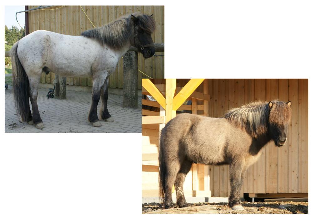 Neues Pferd...???