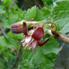 NEUES RÄTSEL: Die Blüte einer essbaren Frucht . . .