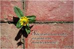 Neues schaffen....Jesaja 43,19