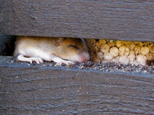 Neues vom Mäusenachwuchs ^o^