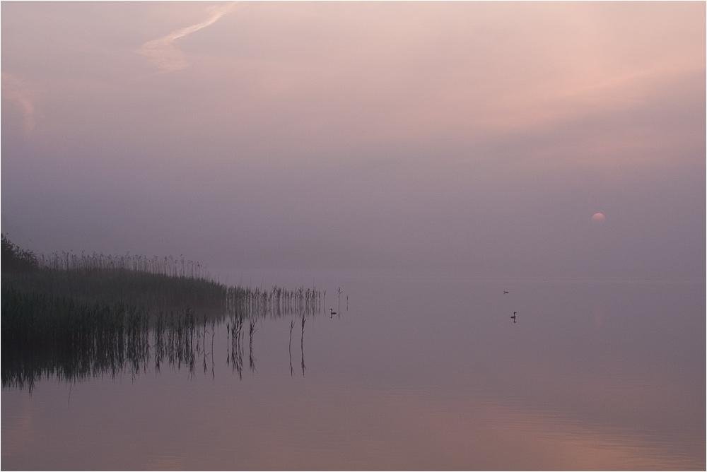 Neues vom See ... (1)