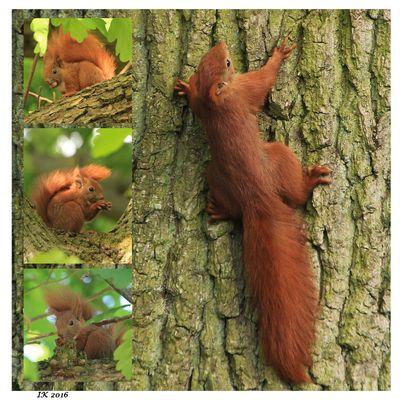 Neues von unseren Hörnchen