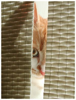 Neugier