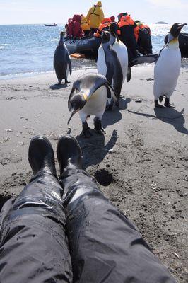 Neugier, dein Name ist Pinguin!