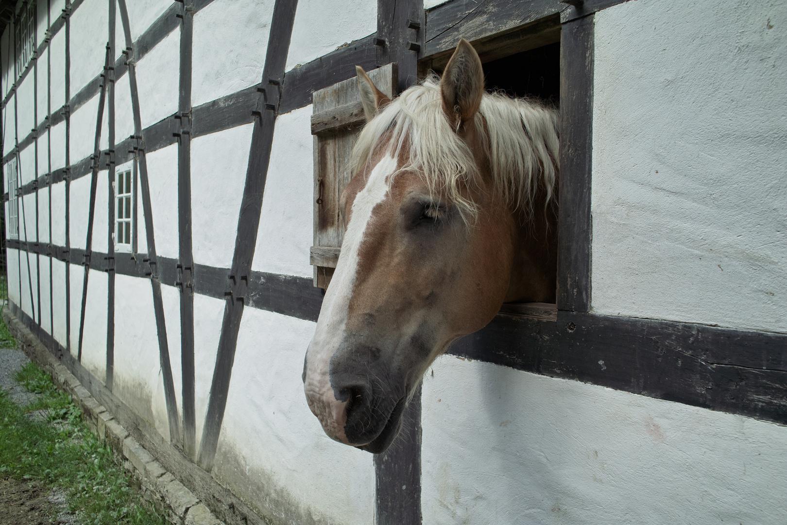 """""""Neugier"""" eines Pferdes"""