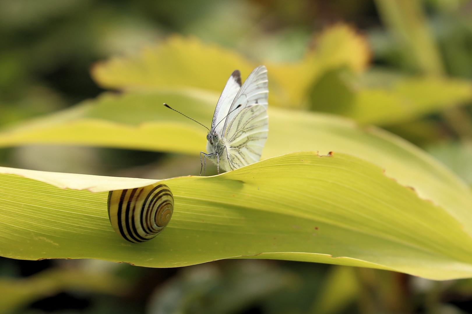 Neugier ist, wenn ein Schmetterling eine Schnecke trifft