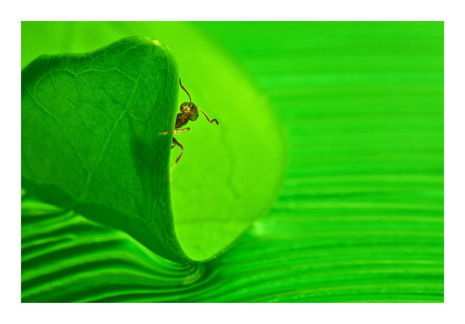 Neugierige Ameise