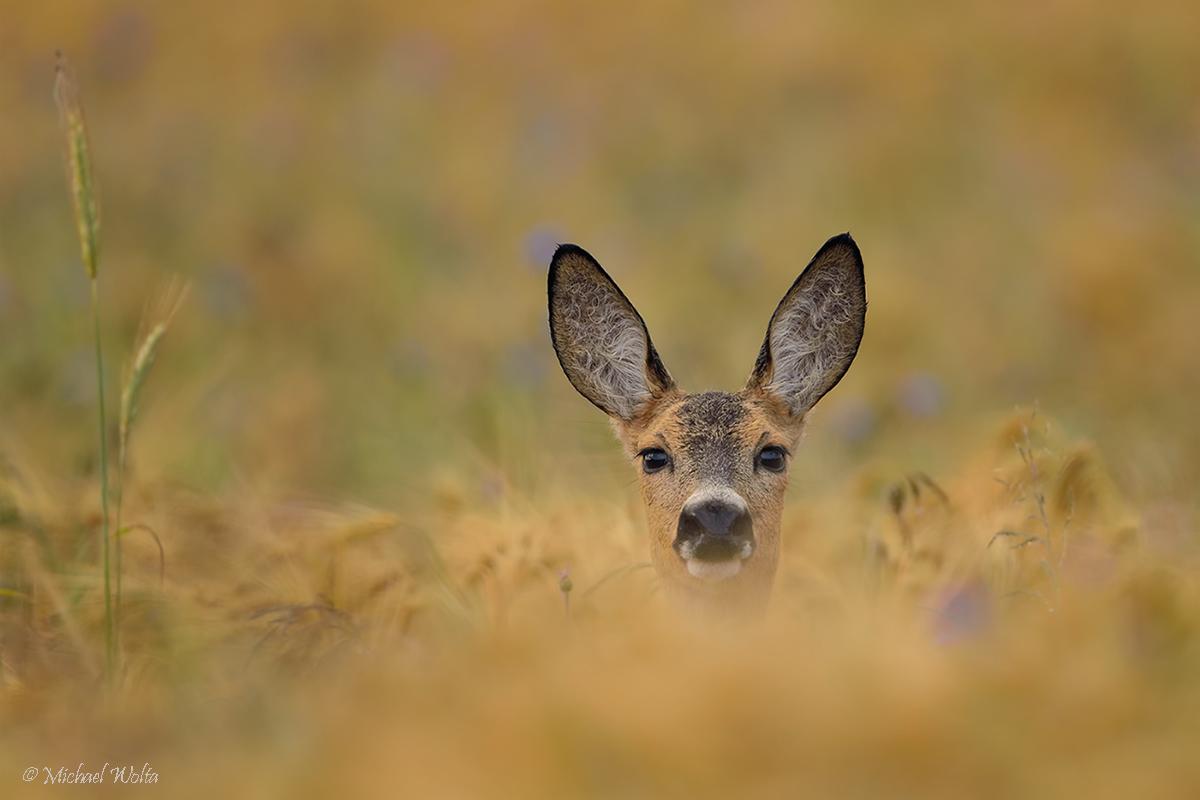 Neugierige Blicke