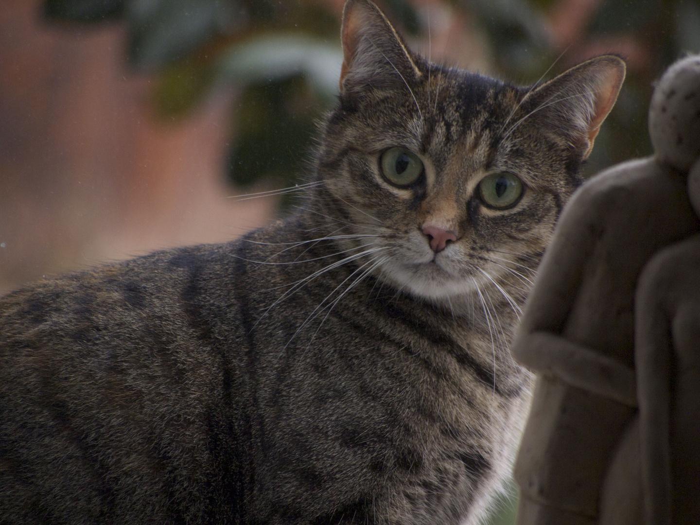 neugierige Katze am Fenster