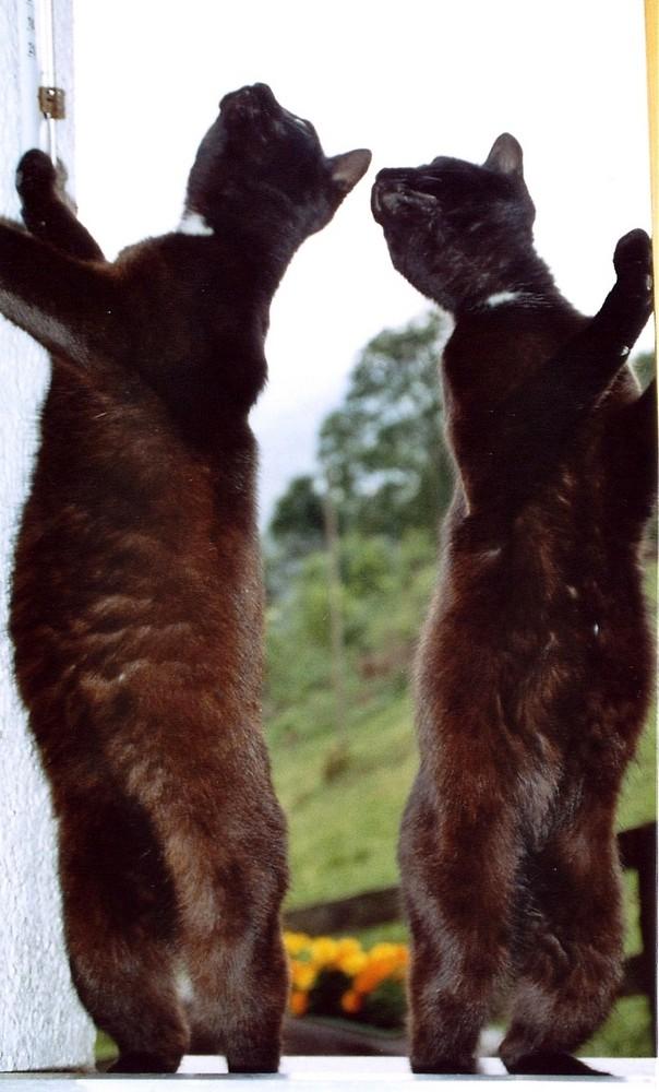 Neugierige Katzen