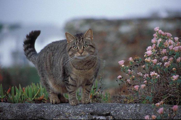 Neugierige Nachbarkatze