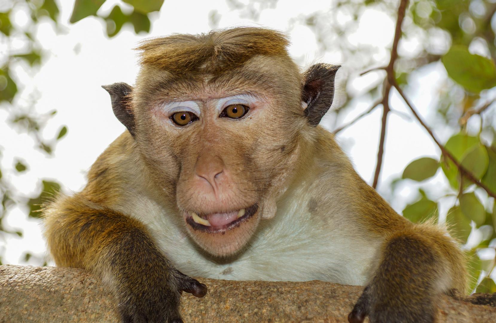 neugieriger Affe